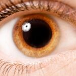 Anatomia del ojo partes del ojo y como vemos