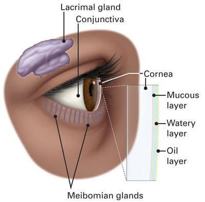 Las capas de la película lagrimal mantienen lubricada la parte frontal del ojo